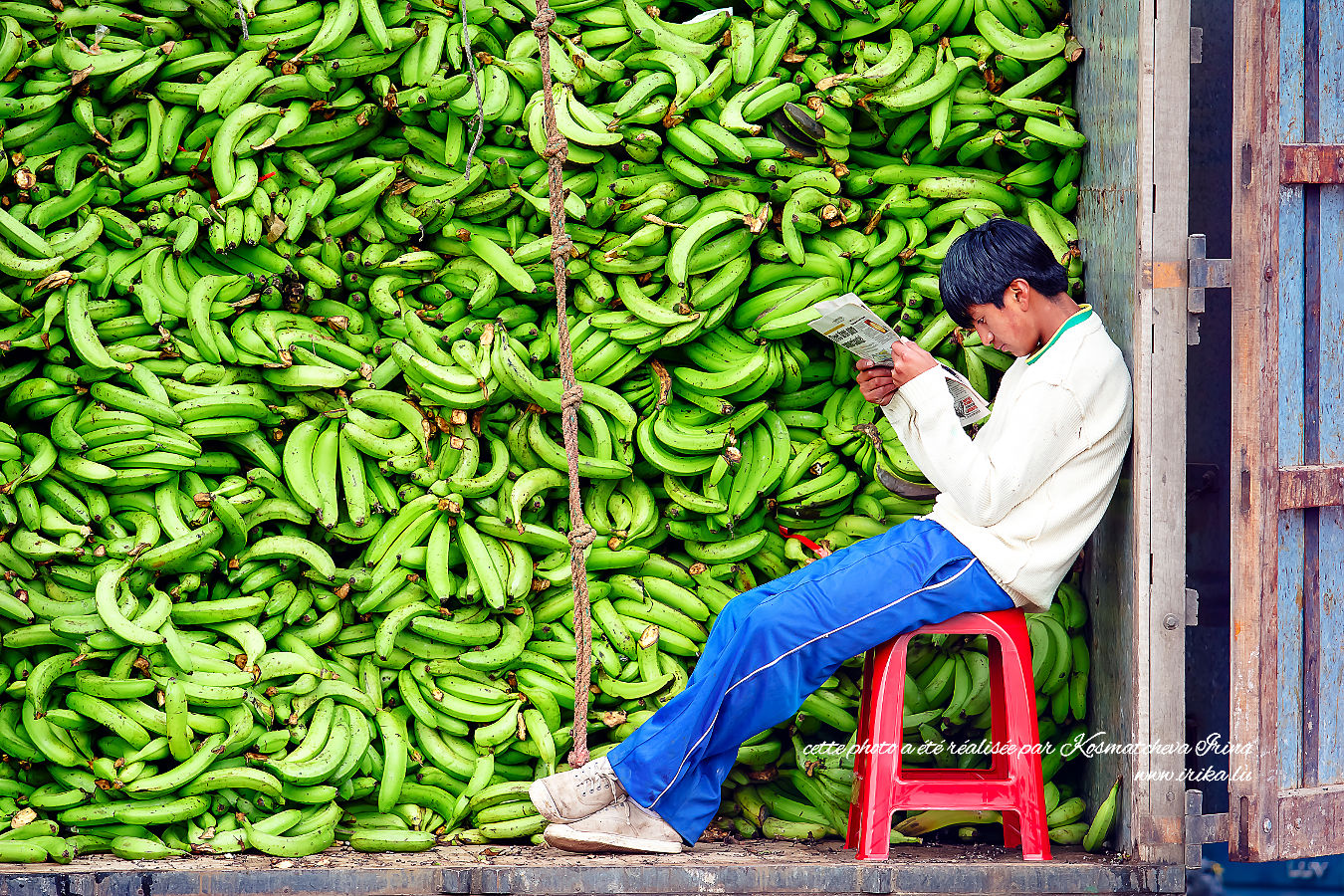 Plein de bananes vertes