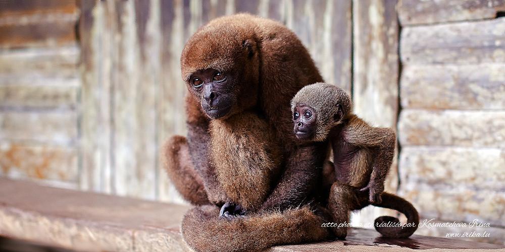 Deux singes tristes