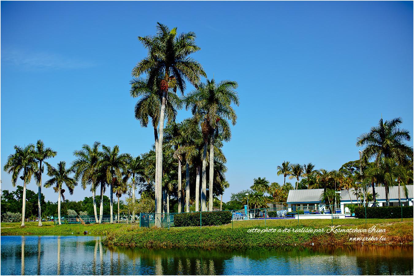 Bels palmiers du Florida