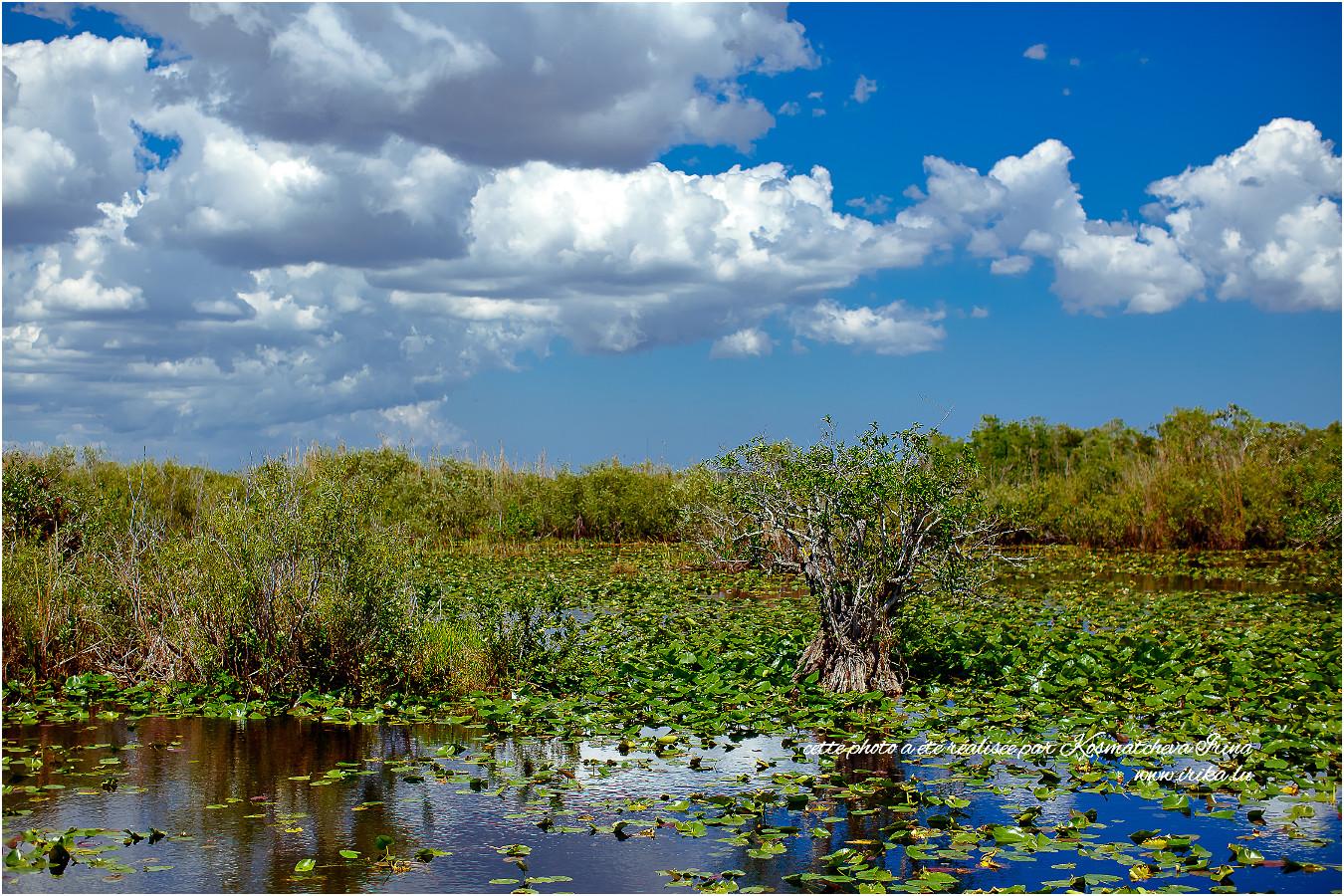 Parc national d'Everglades