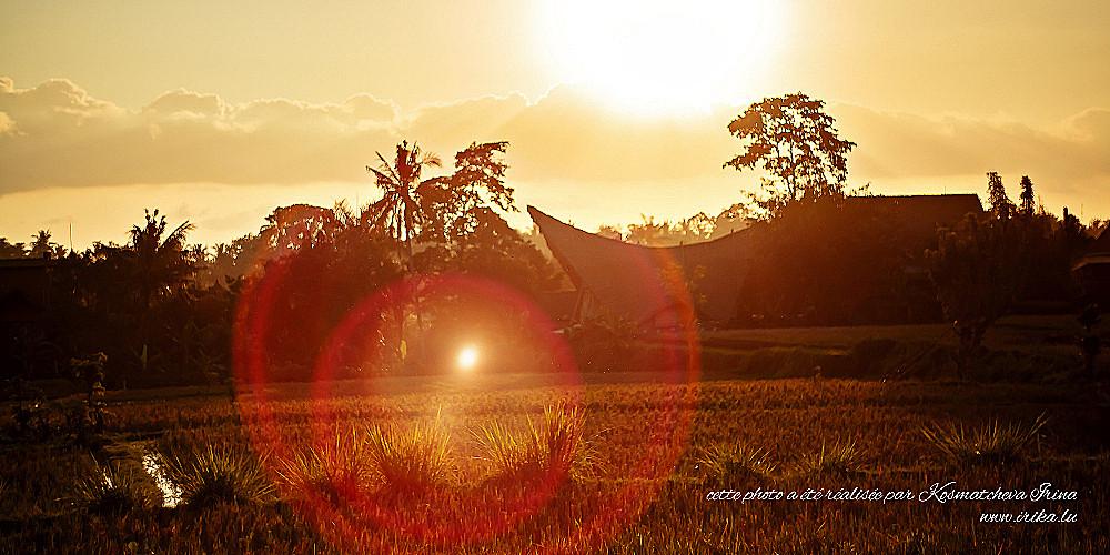 Coucher du soleil dans les rizières