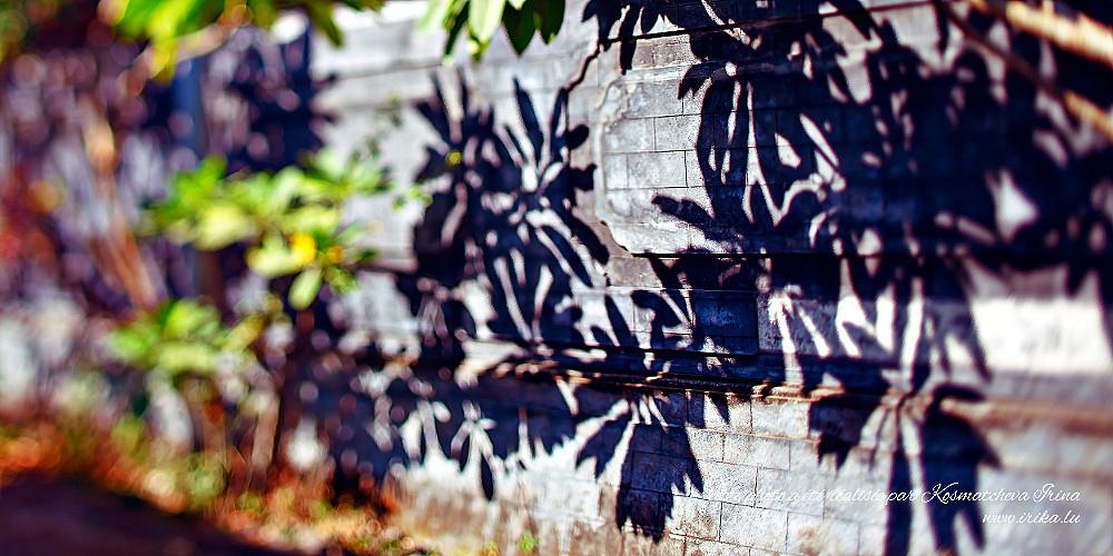 Ombres des plantes exotiques