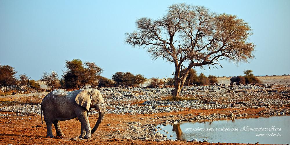 Dans le parc national d'Etoscha