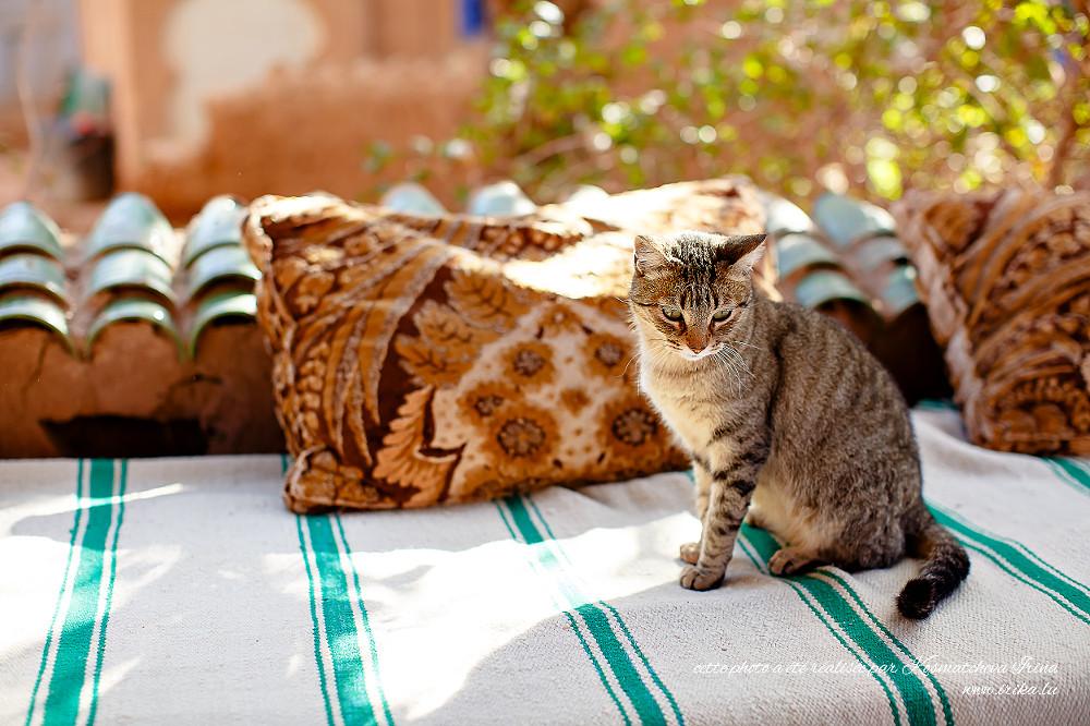 Chat-maroccain