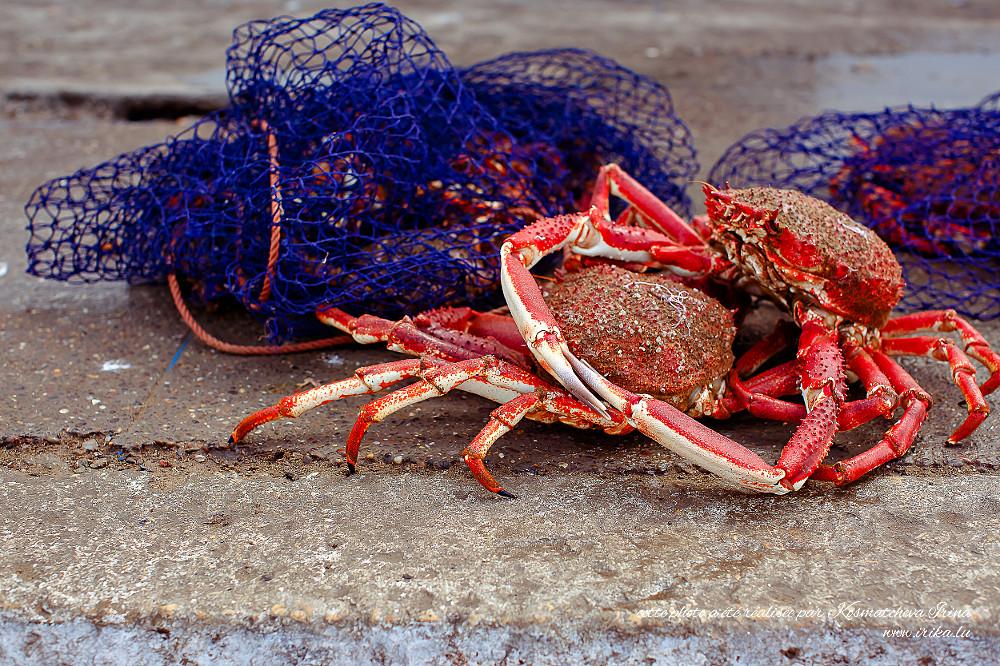 Deux-crabes
