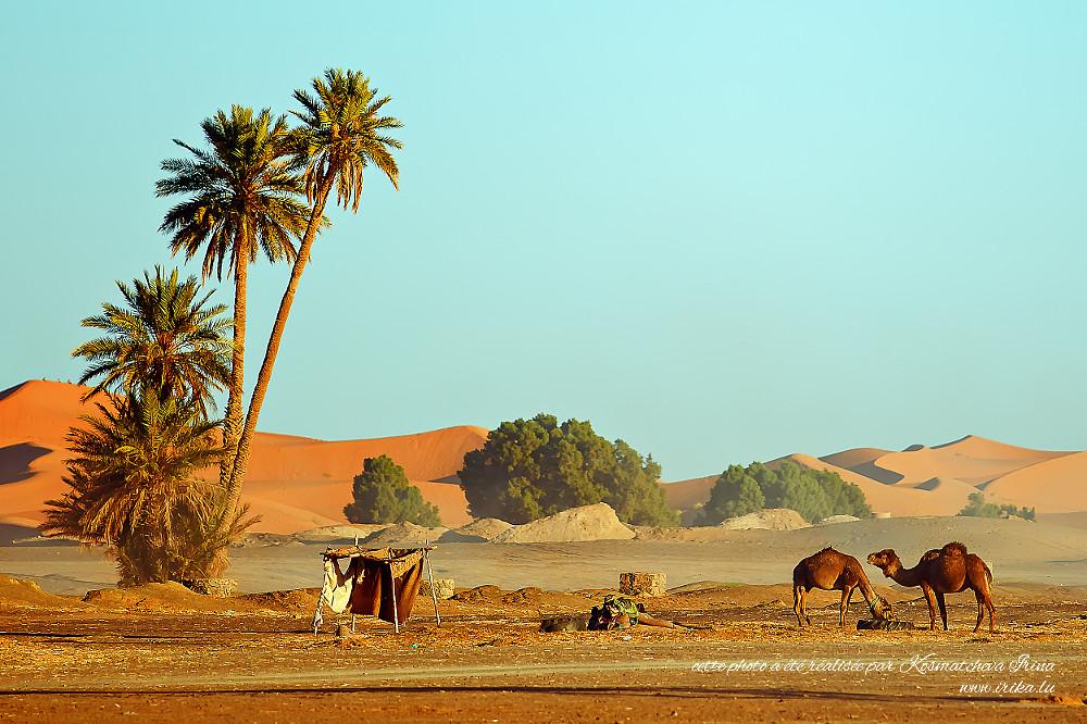 Paysage-à-deux-chameaux