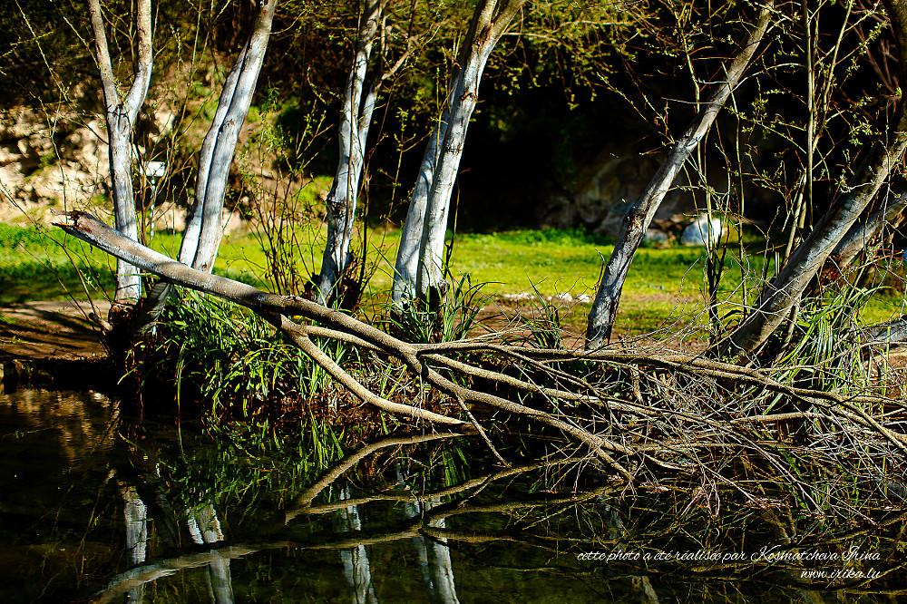 Près-dun-petit-lac