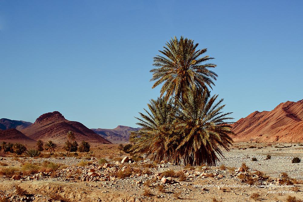 Trio-aux-palmiers