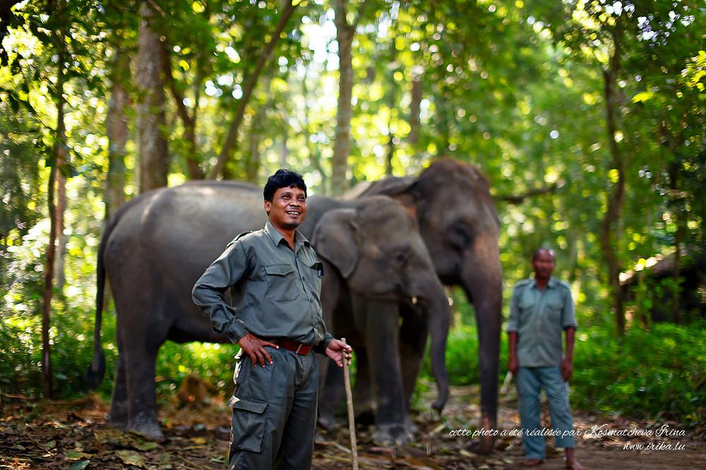 Dans la réserve d'éléphants