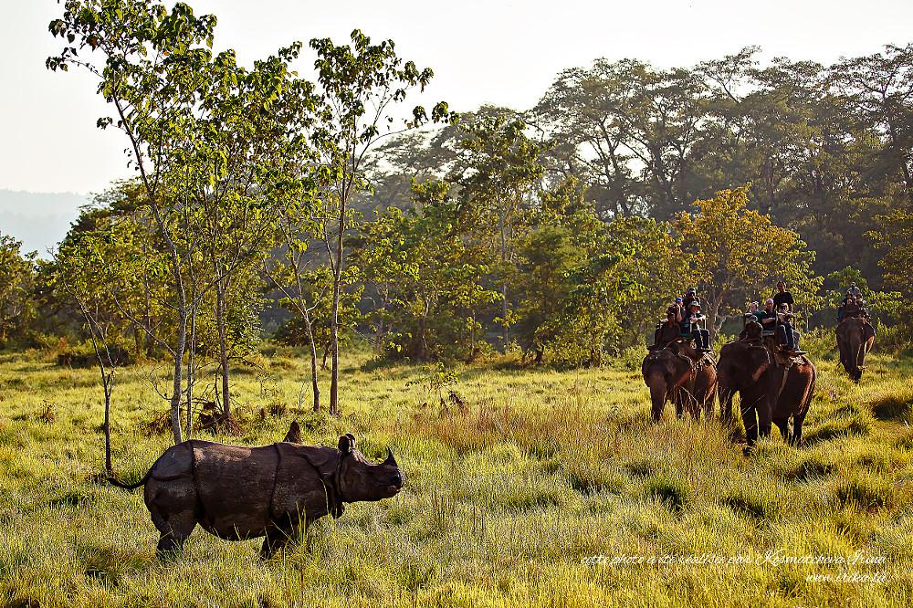 Lors de safari