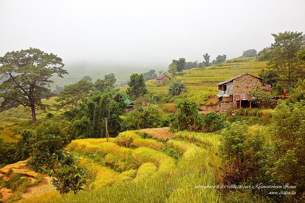 Maisonettes dans les rizières