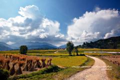Chemin à travers les champs