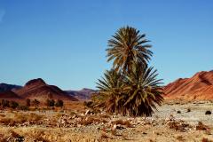 Trois jolis palmiers