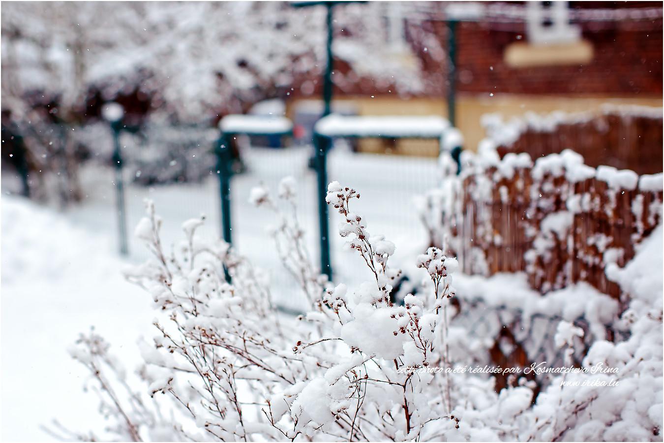 Branche sèche sous la neige